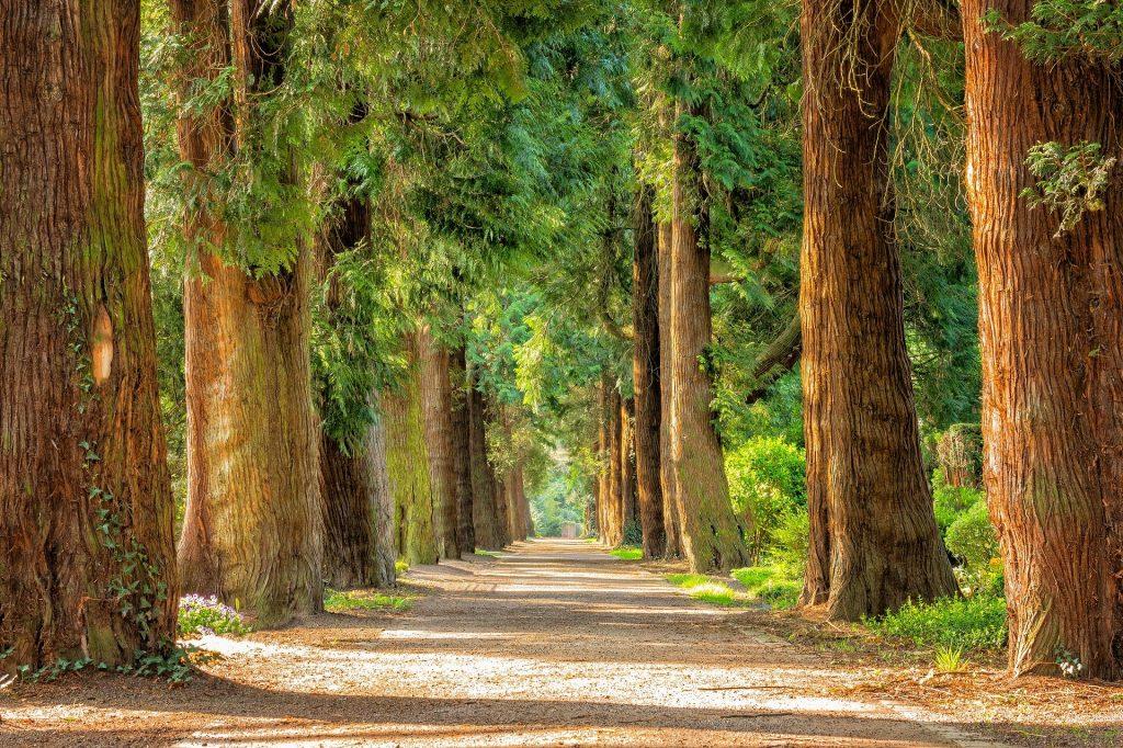 Bomen van leven staan langs de weg en de rivier.
