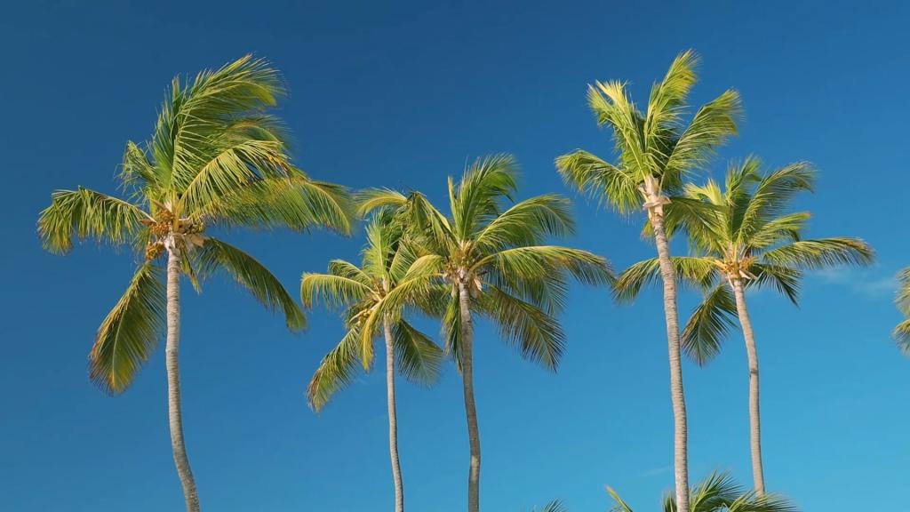 De rechtvaardigen zullen groeien als een palmboom.