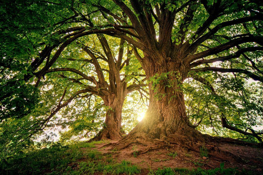 De rechtvaardige is als een gezonde boom.