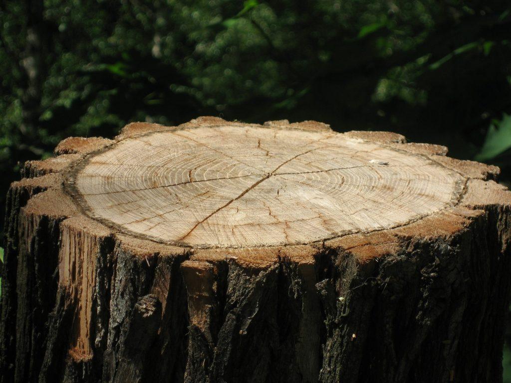Een stronk is alles wat overblijft van een boom.